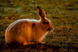 Image of a rabbit for vets now fireworks and pets hub