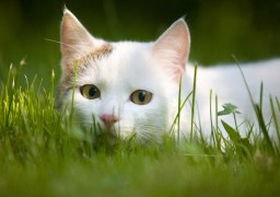 Image of cat in grass highlighting be prepared this summer for pet emergencies.