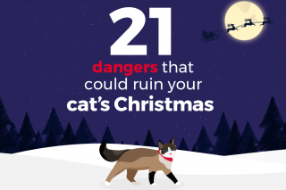 An infographic of Christmas cat dangers.