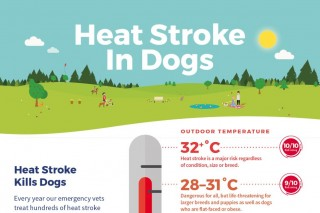 Image of heat stroke infographic for article on dog hot weather