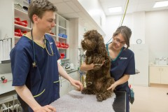 Image of a vet and vet nurse working hard in Vets Now Glasgow for article on principal nurse manager role