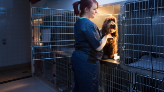 Image of Vets Now vet nurse for article on working night shift tips