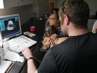 An image of Vets Now vets on the AdvantEdge programme conducting an ultrasound scan of a dog's stomach for a practical learning session. Image for Vets Now article on achieving potential.