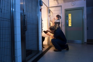 An image of Tobias Grave, a specialist vet at Vets Now Glasgow, looking after a dog at night for Vets Now article for achieving potential