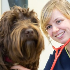 an image of a young vet attending to a dog for Vets Now web page on undergraduate opportunities at Vets Now