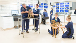 Image of Vets Now pet emergency hospital in Glasgow