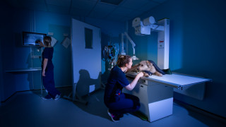 Image of Vets Now nurses working at night for post on flexible working jobs