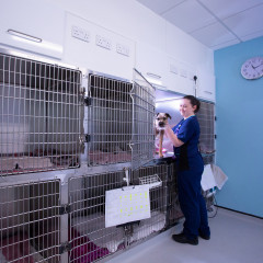 A vet nurse in the clinic for Vets Now Macclesfield jobs page